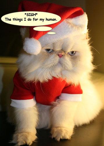 Silliness >> Santa Kitty - Cats Are Silly