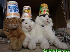 cat_noodles