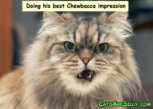 chewbacca_cat