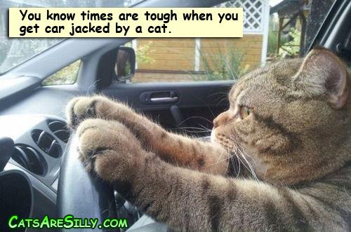 driving_cat