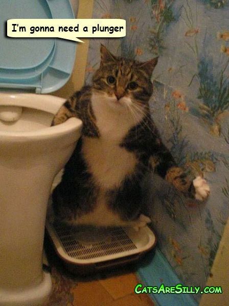 cat has his paw caught in the toilet