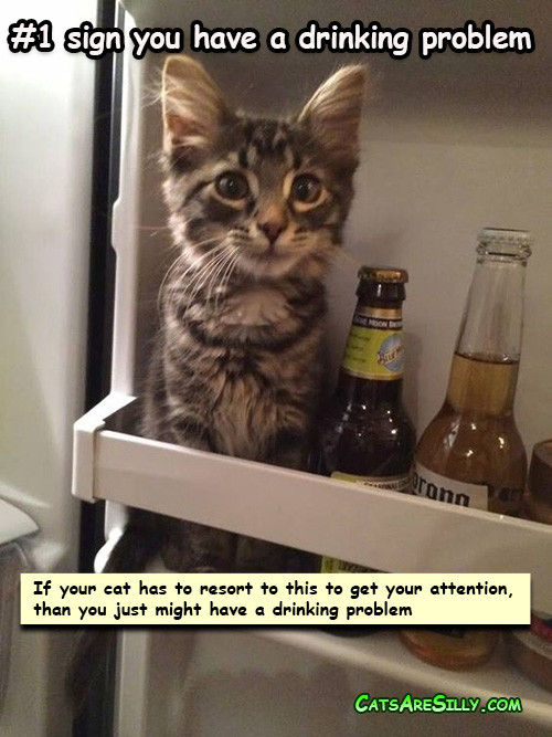 cat_beer